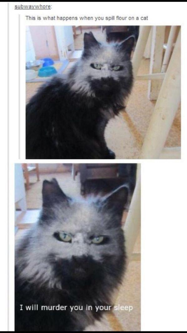 tumblr cats 11