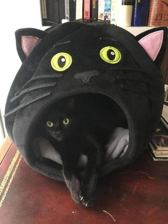 black cat cat bed wish i knew where to one of these
