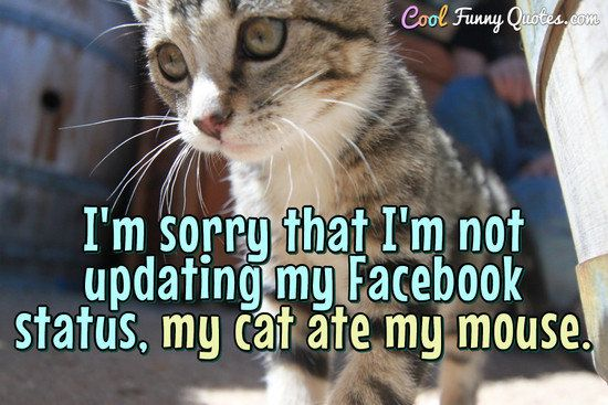 I m sorry that I m not updating my status