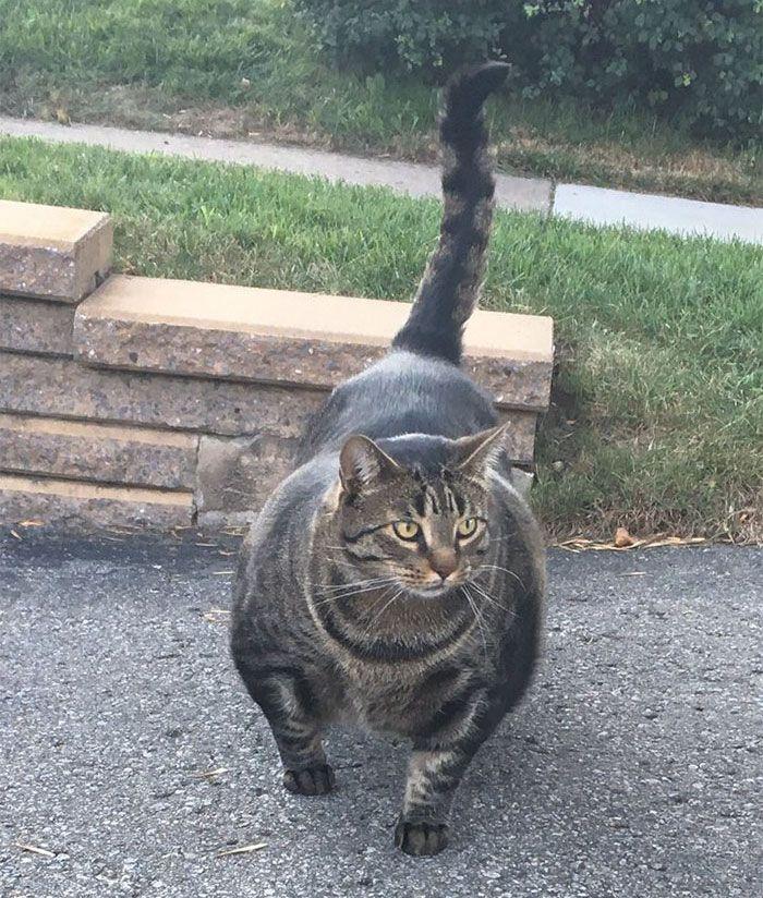 Meet buff cat literally the biggest feline sensation on the internet right now