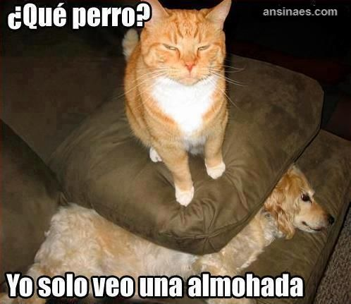 Find the Inspirational Funny Cat Memes In Spanish