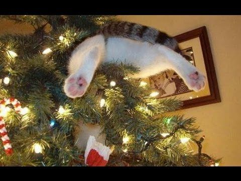 Funny Cats vs Christmas Trees Funny Cats Christmas pilation part 2