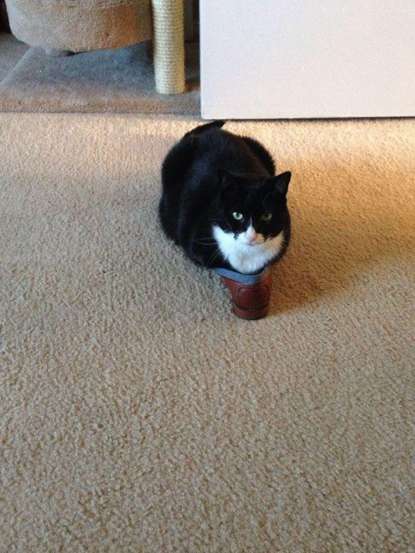 funny cats if it fits i sits 9