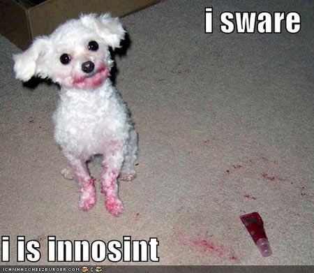 Dog See More Funny