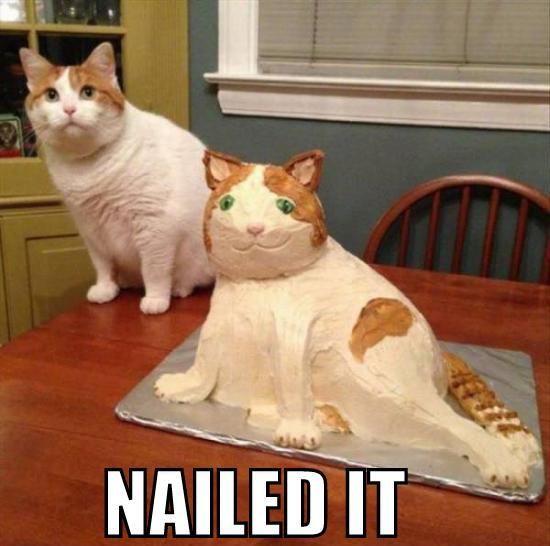fat cat birthday cat cute