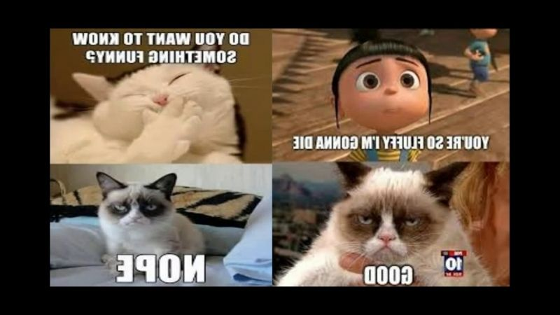 funny cat meme memes clean rosaliegoes Funny Animals Memes That Make You Laugh Out Loud Funny Animal Memes