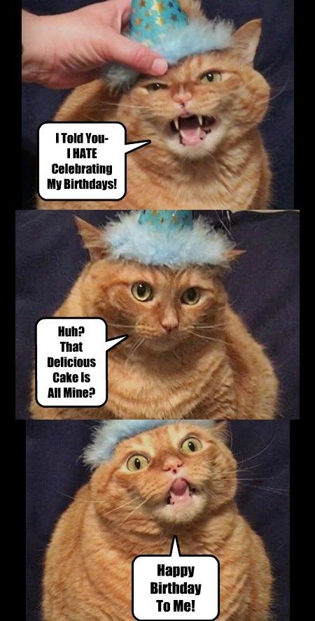 birthday cat loves birthday cake