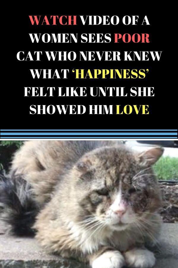 heartwarming cat rescue ideas