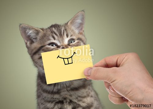 Find the Lovely Funny Happy Cat Pictures