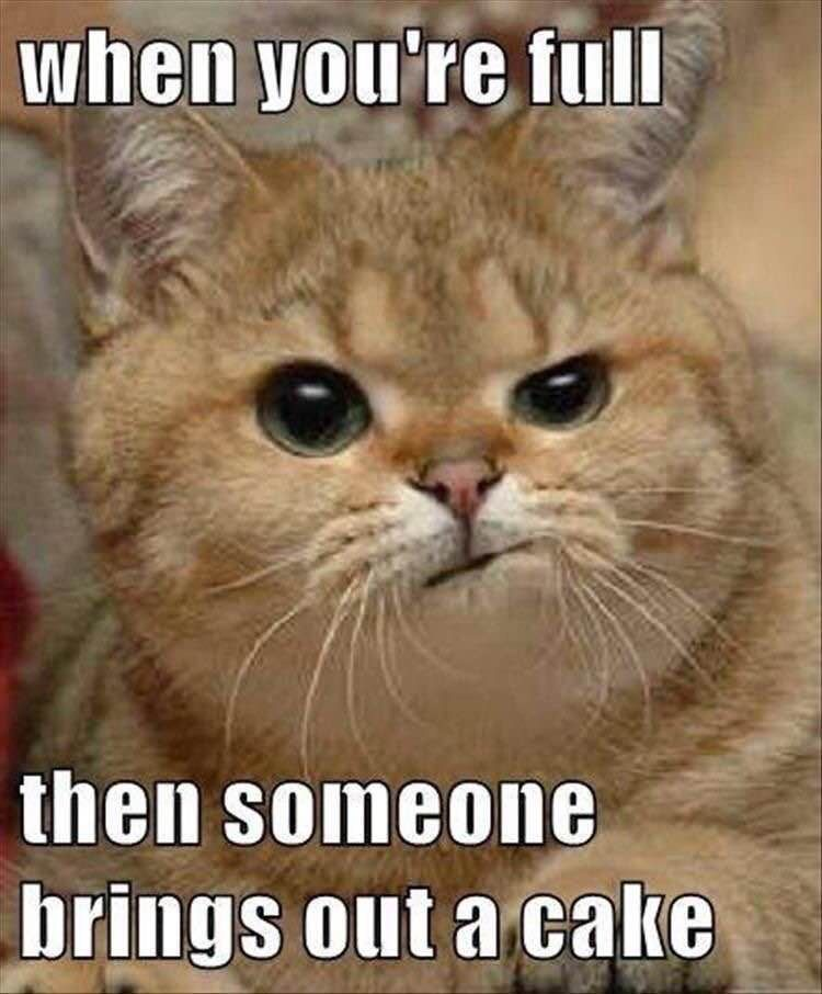 Funny Animals Funny Animal Pics Funny Animal Quotes Hilarious