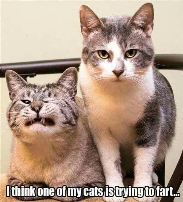 He s just smilin Funny Pics Animals Funny Cat Pics Hilarious Animal Memes