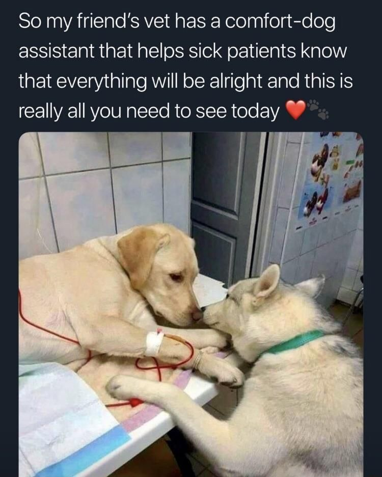 Find the Lovely Sick Dog Funny Pictures