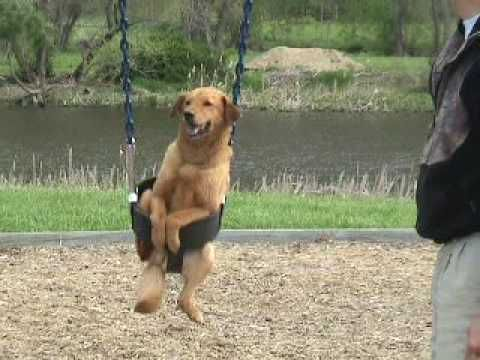 Dog in Swing Dog on Swing Dogs love swings Playground