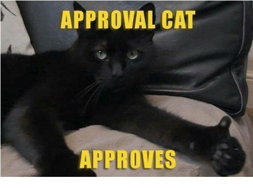 Memes 🤖 and Cat APPROVAL CAT APPROVES