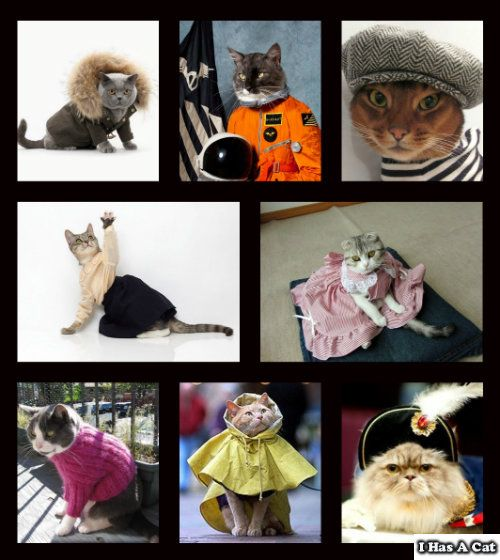 Cats Wearing Clothes