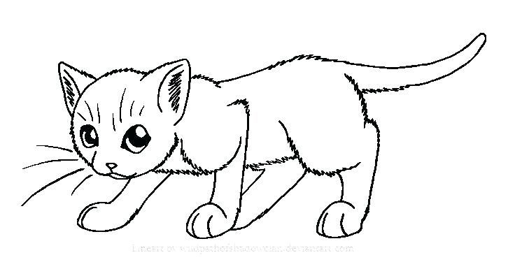 Cat To Color Colouring Pages Cats Funny Cat Coloring Page Clean Cute Dog 5 Big Cat Coloring