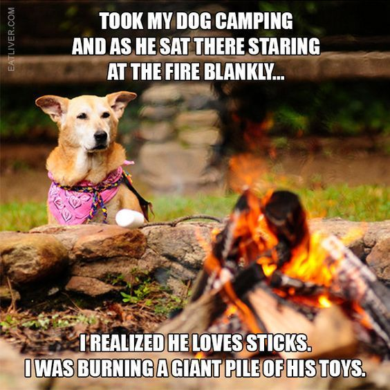 campingmeme campmeme outdoors camping adventures dogs
