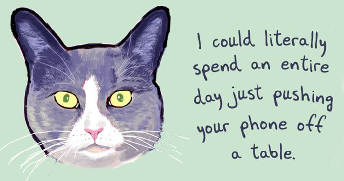 51 Funny Cat And Dog Confessions Reveal What They Actually Think