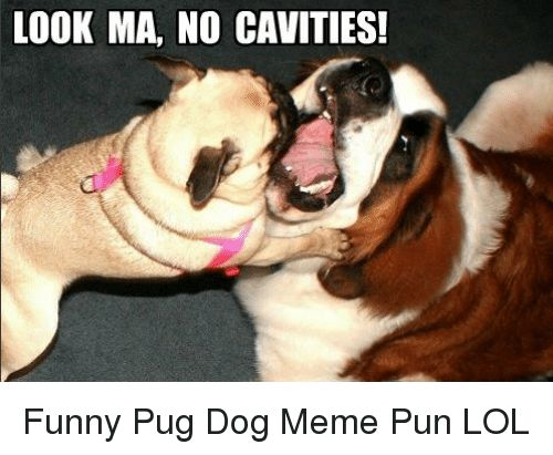 look ma no cavities funny pug dog meme pun funny meme on me me
