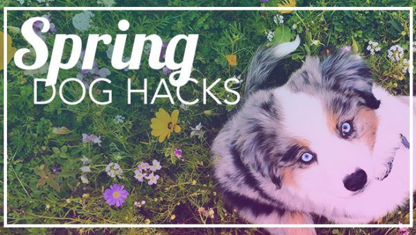 How to Keep Your Dog Safer and Happier in Crazy Spring Weather