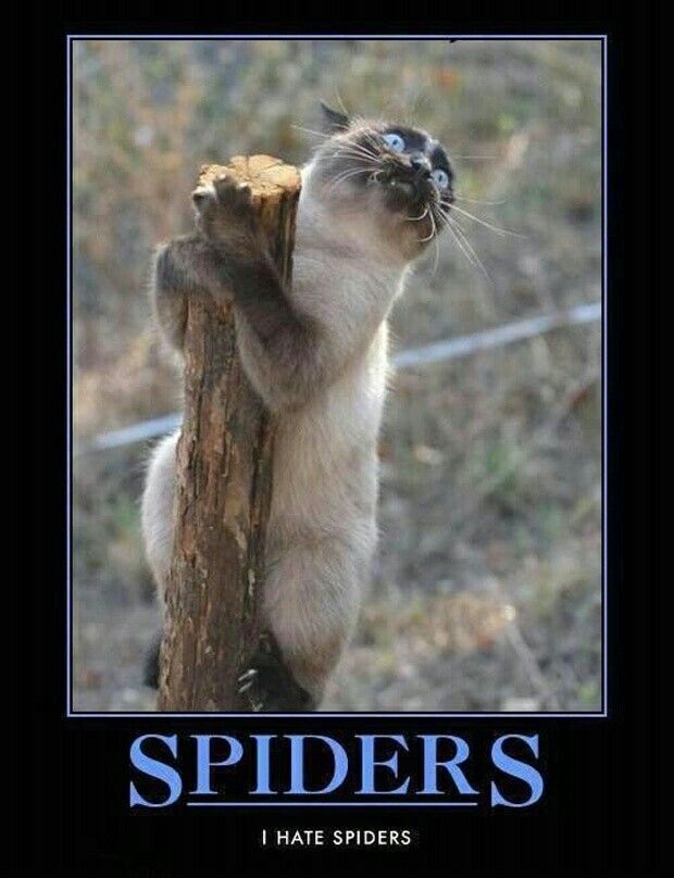Crazy Funny Animal Funnies Funny Memes Funny Spider Memes Jokes Pet Supplies Funny Stuff Funny Things Spiders
