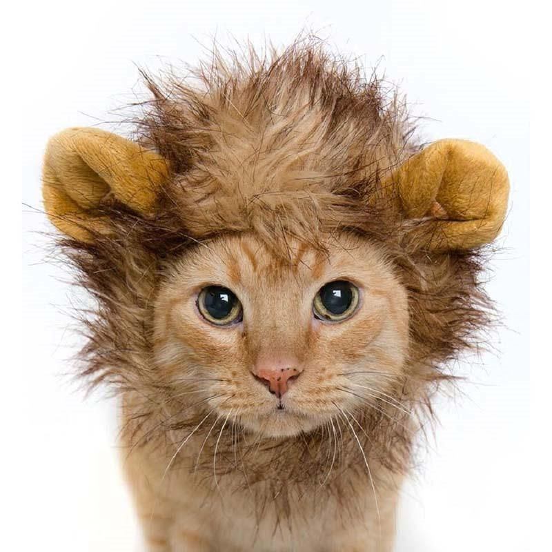 Adorable Lion Mane Costume For Pet Cat Kitten Puppy Wig With Ears Dress Up Clothes Funny Costume Halloween Cat Girl Costumes Halloween Costumes Black Cat