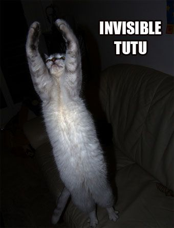 Invisible Cats Invisible Tutu Animals