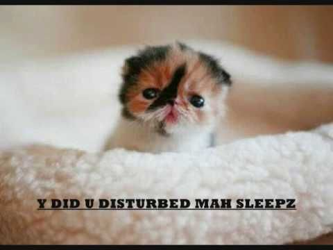 Funny Cats Lol Try Not To Laugh You