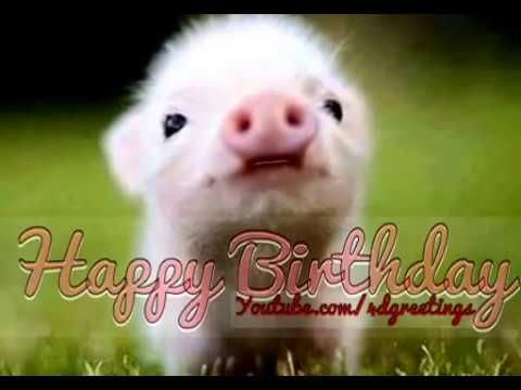 Cute Little Pig Singing Happy Birthday Song