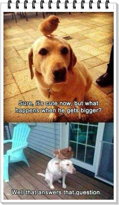 Funny Dog meme Animals are crazy funny dogs funnymemes funnyanimals dogs love viral pinit