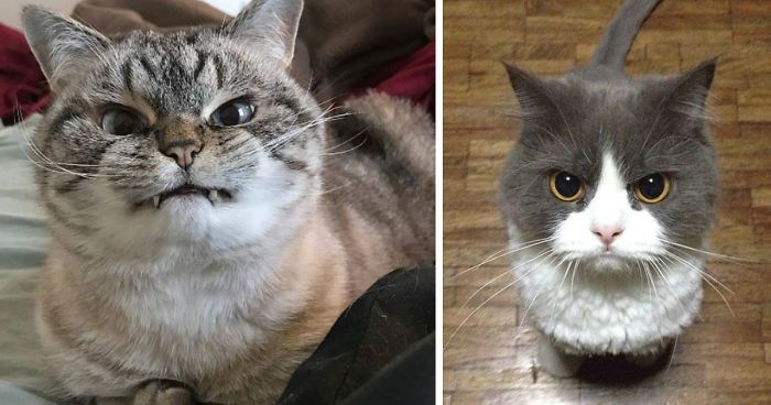 36 The Word s Angriest Cats Ever Who Have Had Enough Your BS