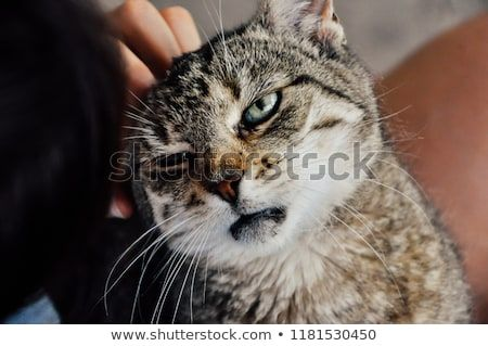 Funny hilarious cat making weird face loving human touch petting Person pets pet scratching animal