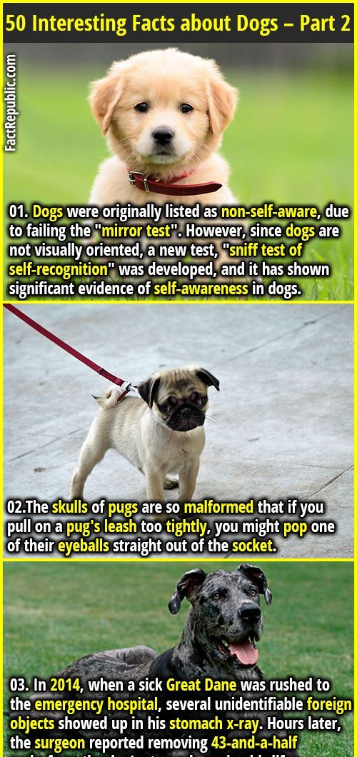 50 Interesting Facts about Dogs Part 2 Fun Facts Did you know Pinterest