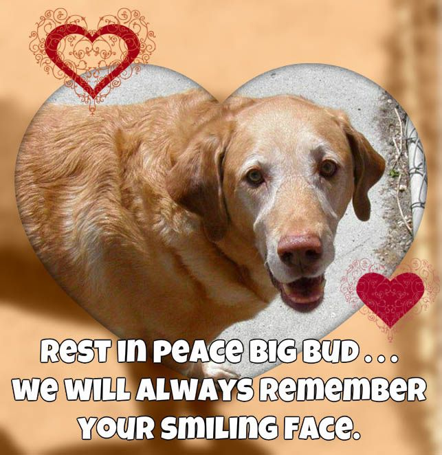 "We just got some sad news Our old friend ""Big Bud"" passed away on Thanksgiving Day Bud s mom Kelly is one of our oldest clients"