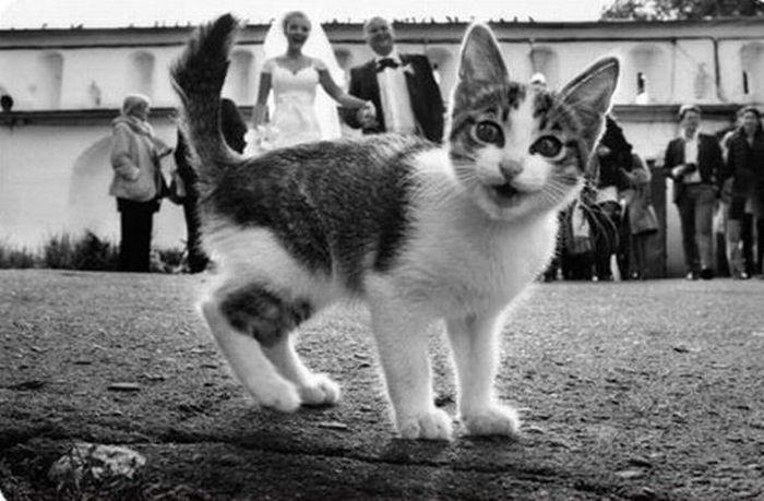 Funny Cats Weddings 10