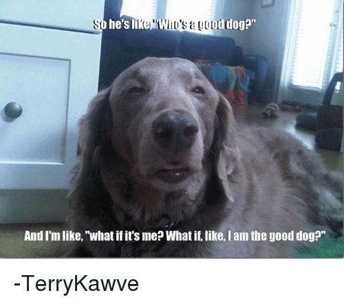 "Memes Good and 🤖 so he s li od dogo"" And I"