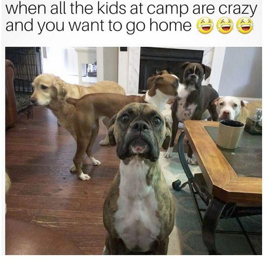 Boxer Funny animal Dog dog like mammal Cat Dog breed