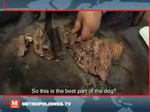 CHINESE FAMILY TV COOKING DOG MEAT