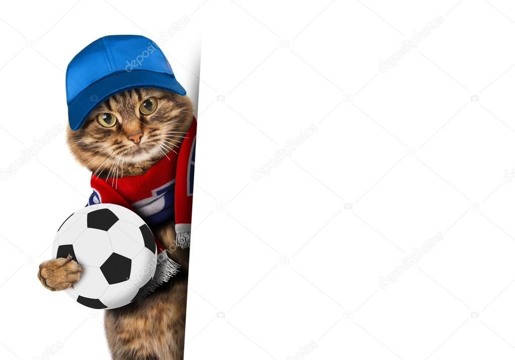 Funny cat with soccer ball on white background Funny cat is wearing a cap and football scarf of France White space for text Football theme