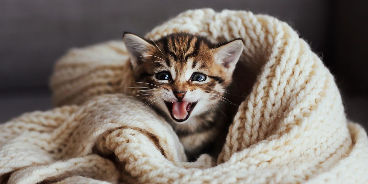 25 Best Cat Quotes That Perfectly Describe Your Kitten Funny and Cute Cat Quotes