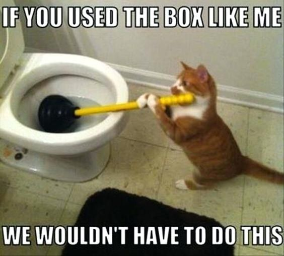 cat quotes funny and memes to help you through the day on