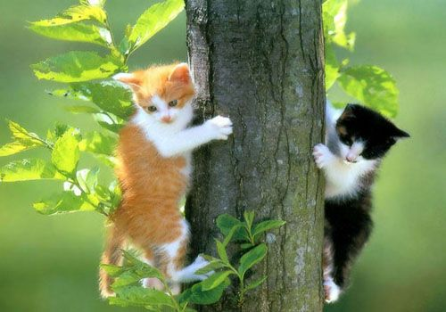 Cats life photographs of cute cats and kittens pics of kittens cute pics images of kittens funny photos of cats photos of kittens funny photos week