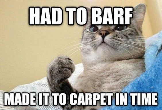 Find the Prodigious top Funny Cat Pictures