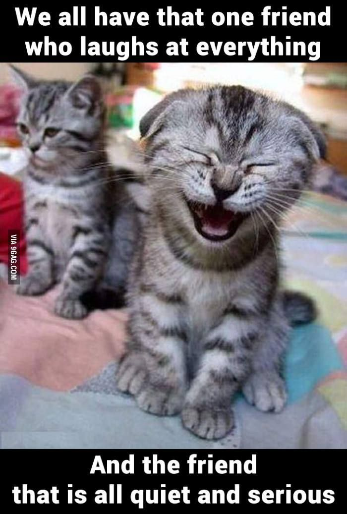 Find the Shocking Animal Funny Pictures with Captions