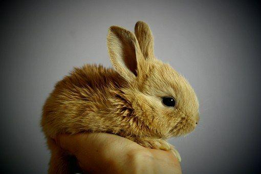 Rabbit Palm Hand Bunny Cute Small
