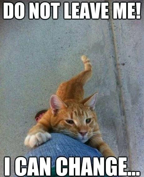 funny cat meme more than two dozen memes pictures of cats in awkward or hilarious poses