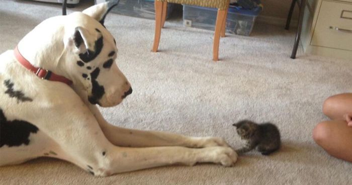 Find the Shocking Funny Dog and Cat Fighting Pictures