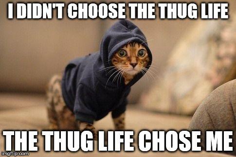 funny cat meme thug life