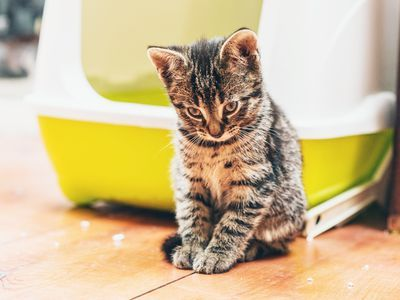Take Care of Your Cat s Messy Litter Box Habits