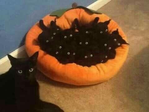 Black cat with her kittens in Halloween orange cat bed